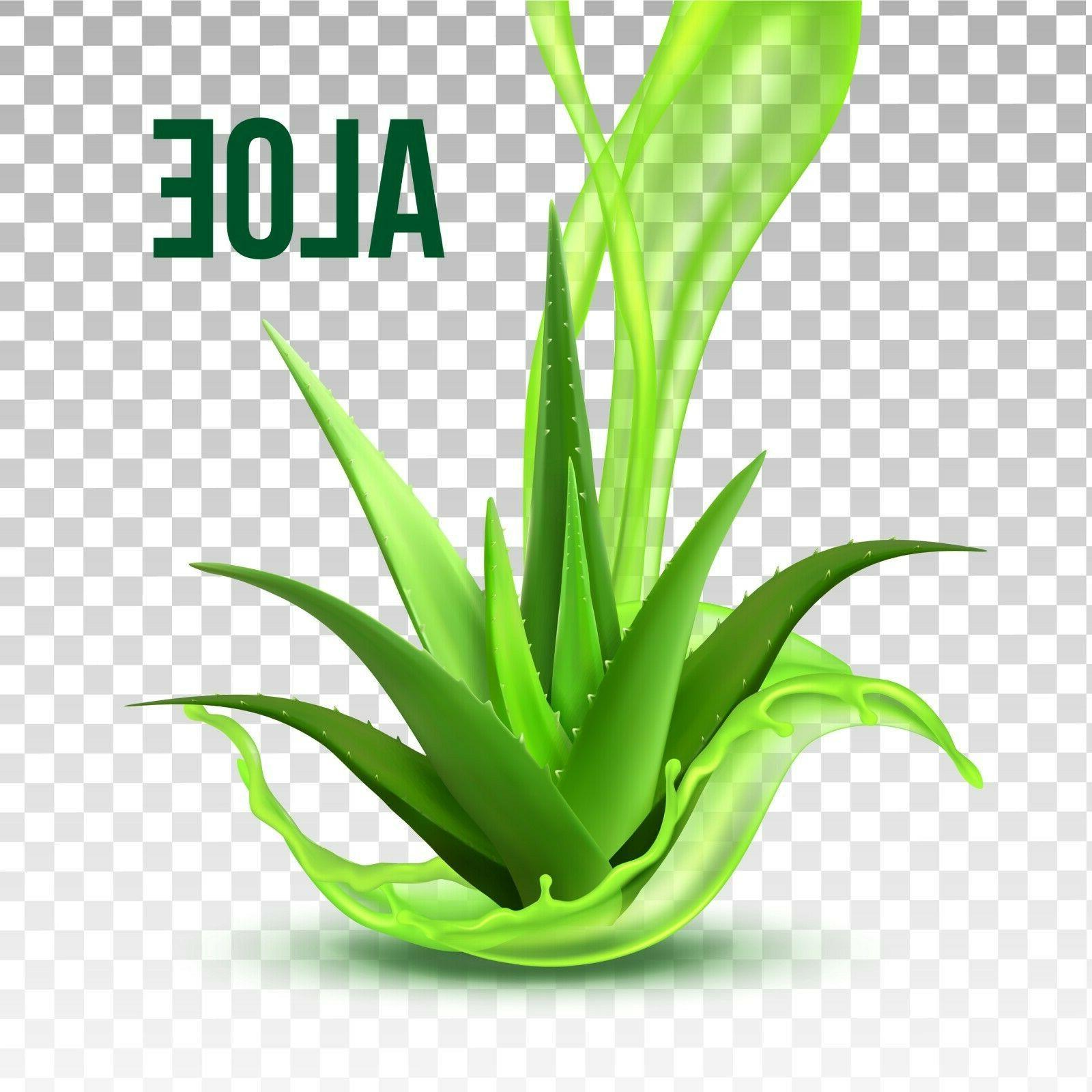 Hand Aloe Alcohol Ship!